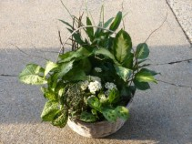 Blooming and Green Planter Mixed Indoor Plants with Kalanchoe