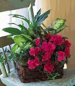 Blooming Azalea Basket