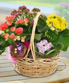 Blooming Basket Basket of Blooming Plants