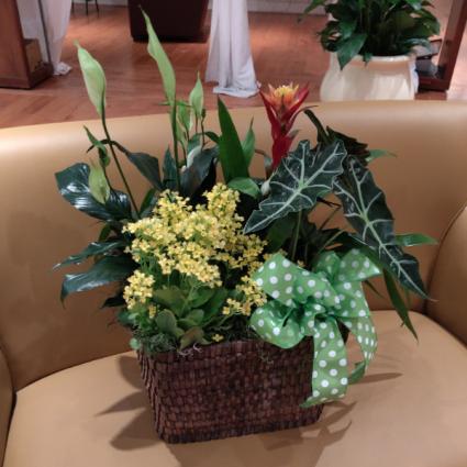 Blooming Basket Plants