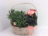 Blooming basket SPECIAL!!!