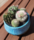 Blooming Beautiful! Cacti Planter