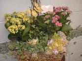 Blooming Beauty Blooming basket