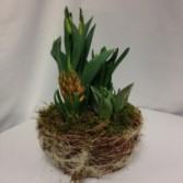 Blooming Bulbs Blooming Spring Planter