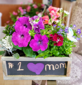 Blooming Chalkboard Planter plants
