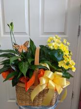Blooming Combo Basket