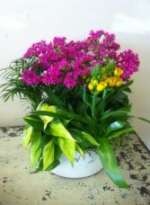 Blooming Container Garden