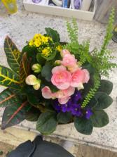 Blooming Dish Garden