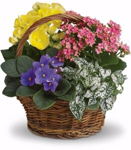Blooming Dish Garden Basket