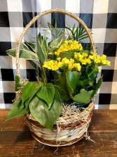 Blooming Dish Garden Basket Plant