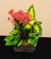Blooming Dish Garden of Assorted Plants