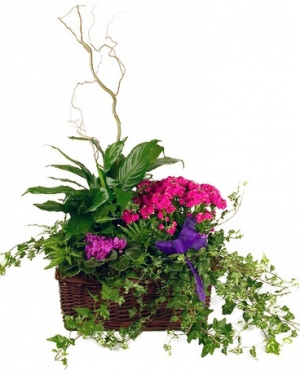 Blooming Garden Basket  in Southern Pines, NC | Hollyfield Design Inc.