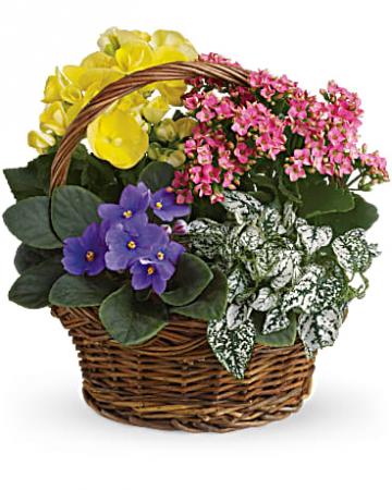 Blooming Garden Basket  Blooming Plants