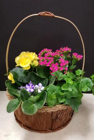 Blooming Garden basket Dish Garden of Plants