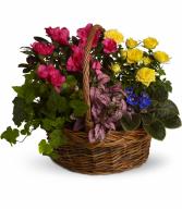 Blooming Garden Basket Plant