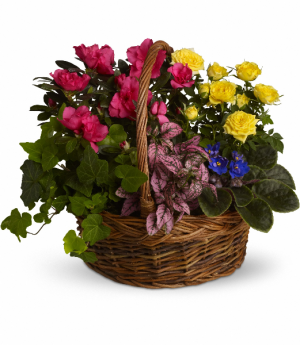Blooming Garden Basket Plant in Rossville, GA | Ensign The Florist