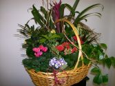Blooming Garden Basket Plants