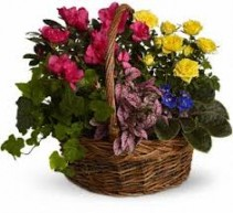 Blooming Garden Basket T213-3A `
