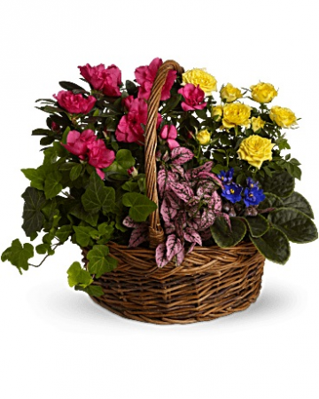 Blooming Garden Mixed Plant Basket