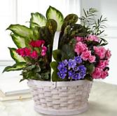Blooming Garden Plant