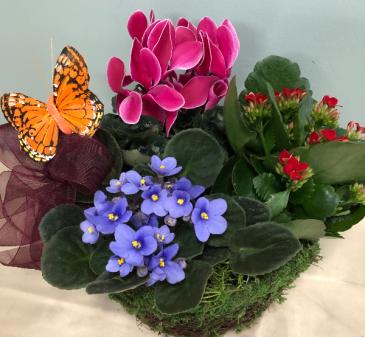 Blooming Gardens plant basket