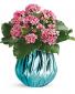 Blooming Gem Kalanchoe