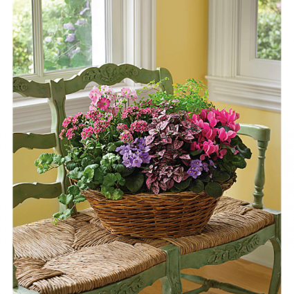 BLOOMING GREEN BASKET BMG
