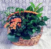 Blooming Green Garden Basket