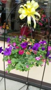 Blooming Hanging Basket annual mixture