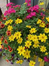 Blooming Hanging Basket Greenhouse Basket
