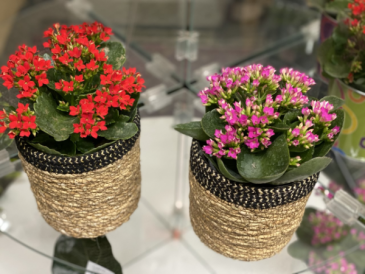 Blooming in Basket