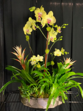 Blooming Orchid Garden XL
