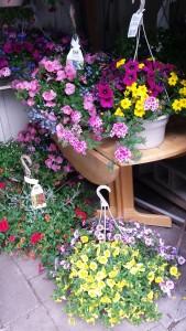 Blooming Outdoor Basket Hanging Basket