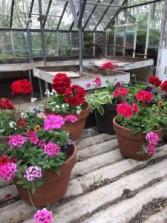 Blooming Outdoor Flower Pot