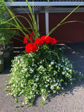 Blooming Patio Pot outdoor