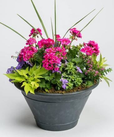 Blooming Patio Pot Planted Seasonal Annuals