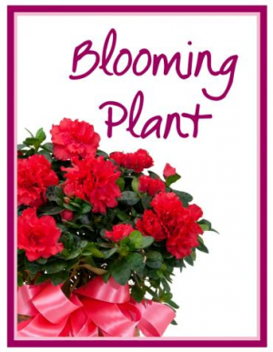 Blooming Plant  Designer's Choice  in Nevada, IA | Flower Bed