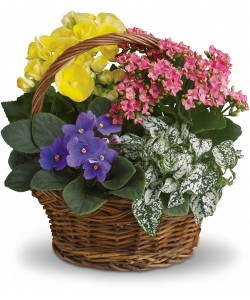 Blooming Plant Basket  in Northport, NY | Hengstenberg's Florist
