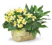 Bautiful Blooms A Blooming Plant Basket