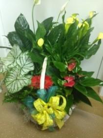 Blooming Plant Basket Multiple plant basket