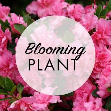 Trio Blooming Plant Basket