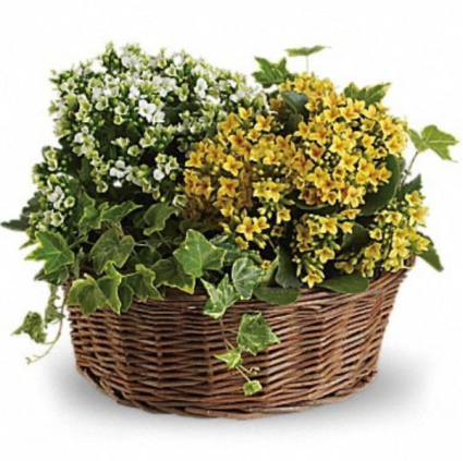 Blooming Plant Basket Plants