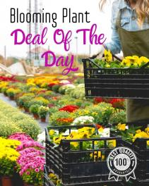 Blooming Plant Deal of the Day Plant