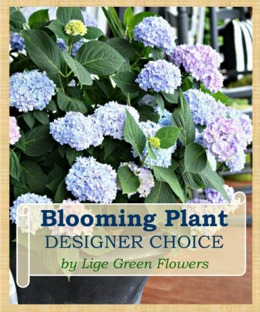 Blooming Plant Designer's Choice