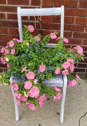 Blooming plant Plant in Elyria, OH | PUFFER'S FLORAL SHOPPE, INC.