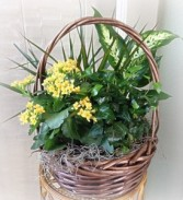 Blooming Planter Basket Plant