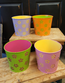 Our Blooming Plant Pots Samples