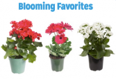 Blooming Plants Availability varies