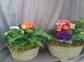 Blooming Rain Garden Blooming Plant