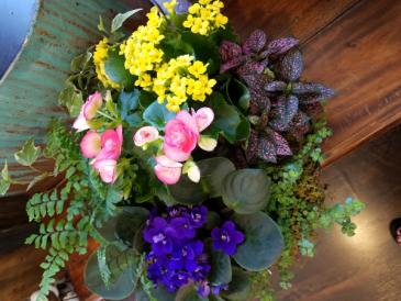 Blooming Rain Garden Live plants